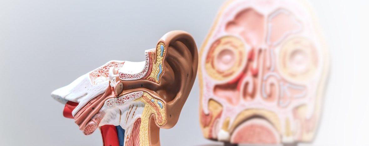 HNO Arztpraxis in Pinneberg – Ohrenplastik